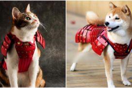 Японцы создали самурайские доспехи для котов и собак