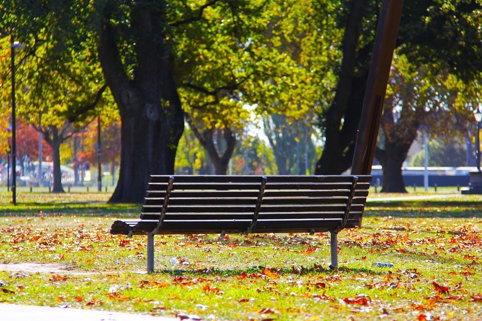 природа скамейка