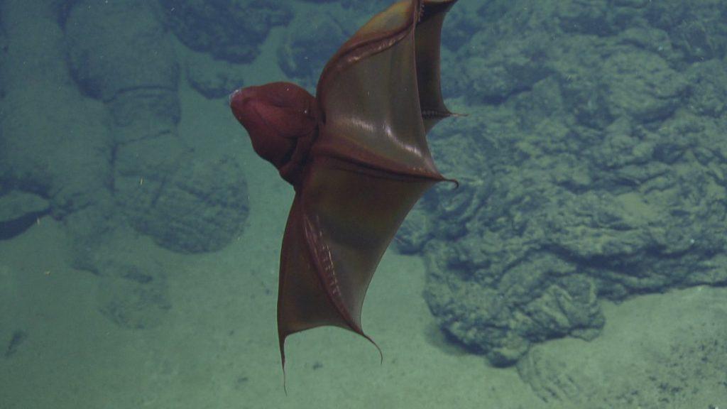 Адский вампир E/V Nautilus